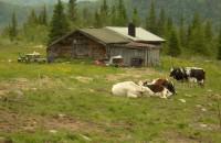 Noen bilder fra Vikdalen